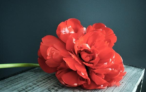 handling grief flower