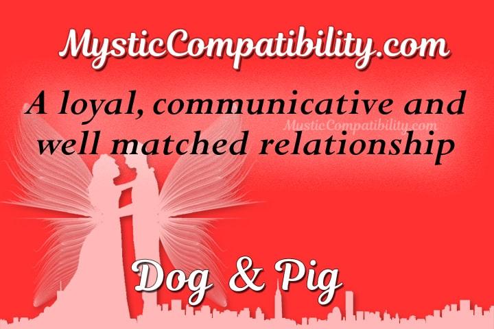 dog pig compatibility