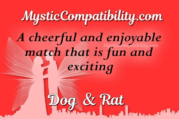 dog rat compatibility