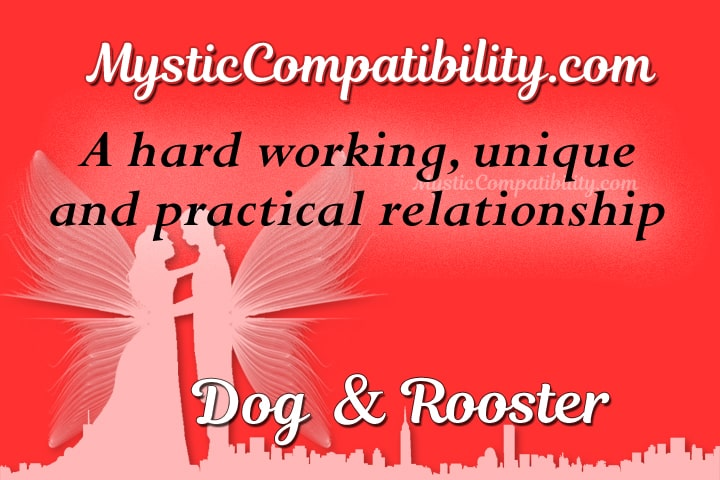dog rooster compatibility