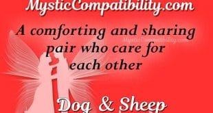 dog sheep compatibility