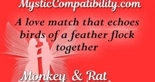 monkey rat compatibility