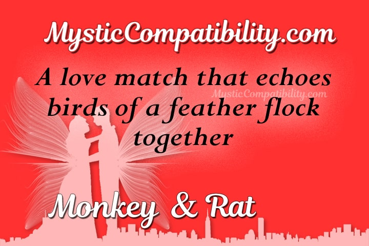 monkey rat compatibility