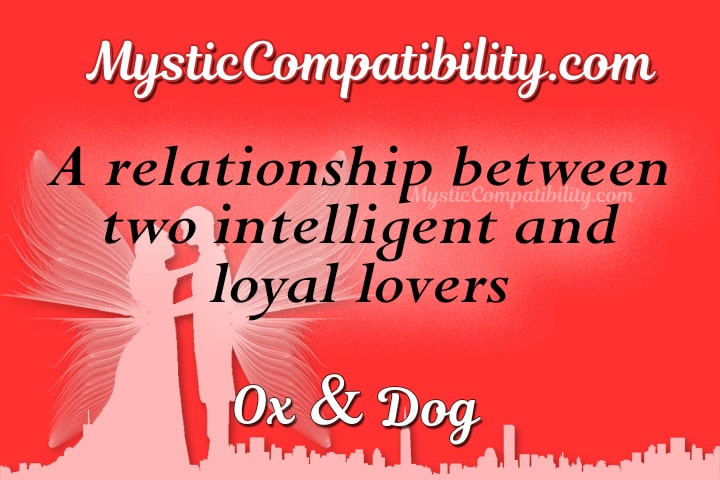 Ox Dog Compatibility