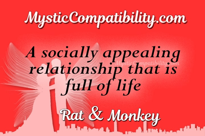 Rat Monkey Compatibility
