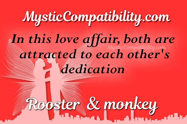 rooster monkey compatibility