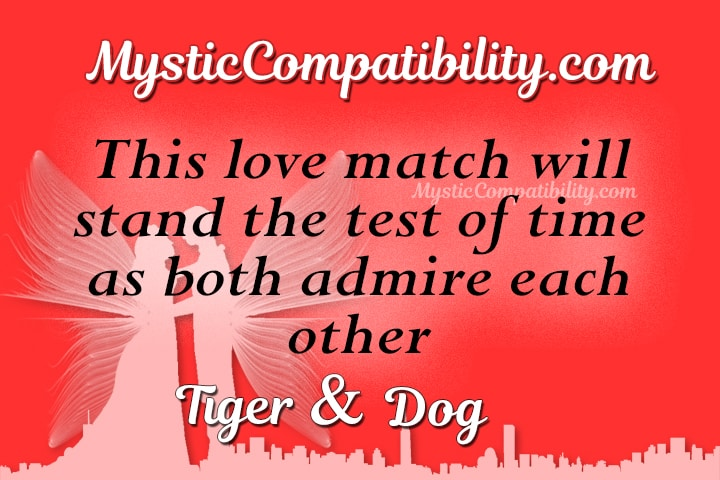 Tiger Dog Compatibility