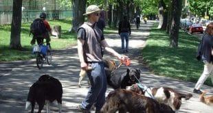 dating a dogwalker